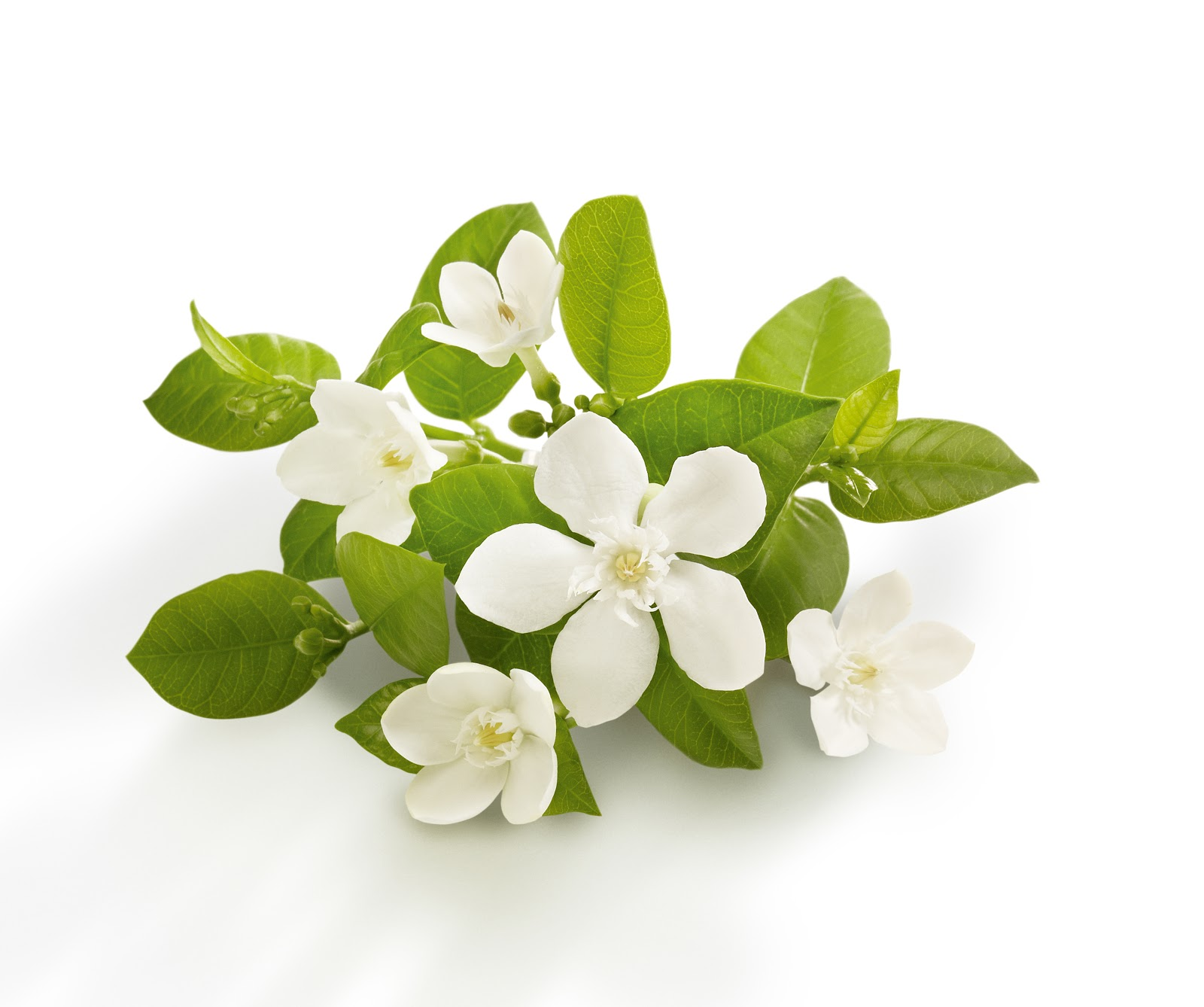 Neroli Oil Jade Balden